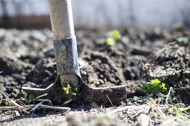 Sprawdź 3 sposoby napoczątek ogrodu - samodzielna praca