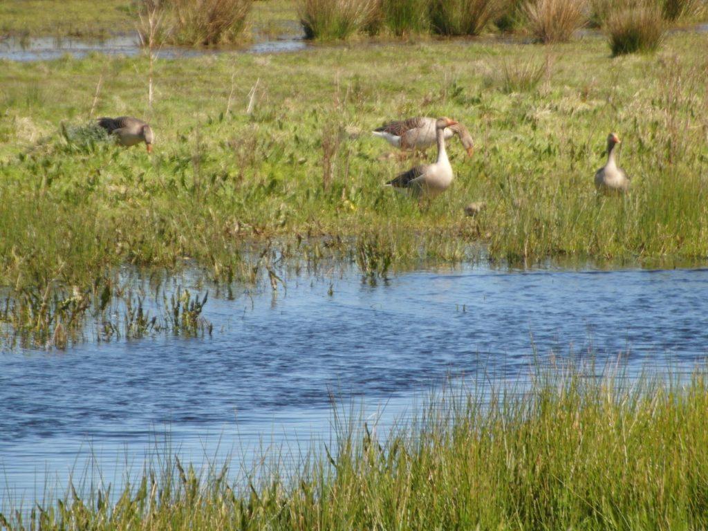 ptaki wHolandii, Dobry plan - krajobraz Holandii