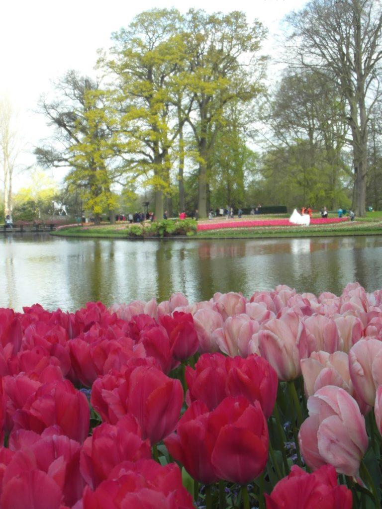 Keukenhof, Holandia - tulipanowy raj, park