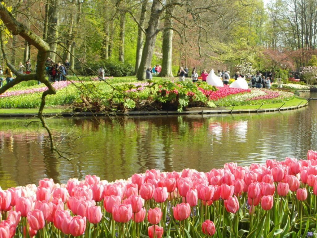 Keukenhof, Holandia - tulipanowy raj, przepiekny park
