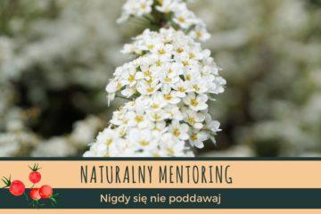 Nigdy się nie poddawaj, czyli co mają wspólnego rośliny z motywacją? naturalny mentoring