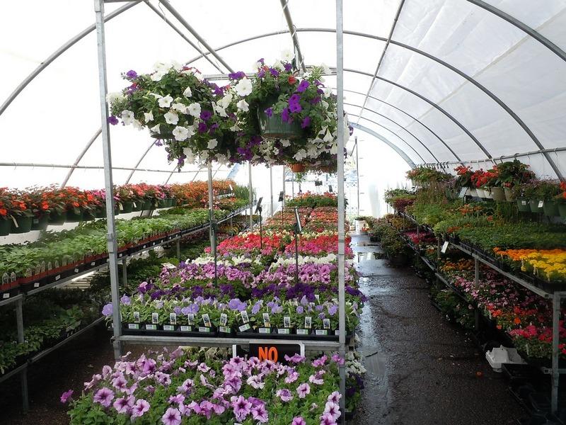 błędy początkujących ogrodników - zaduży wybór
