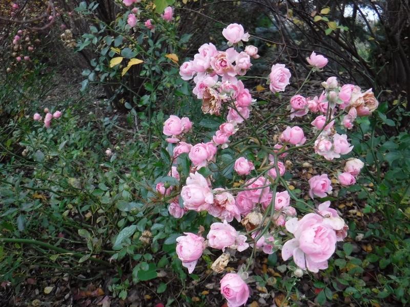 roza-the-fairy-kolorowe-liscie
