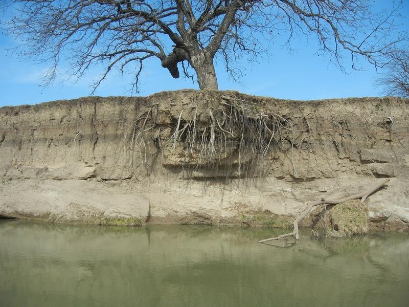 odległość sadzenia drzew odinstalacji podziemnych - korzeń