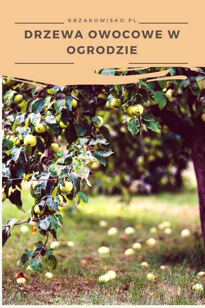 Jak rozplanować drzewa owocowe wogrodzie