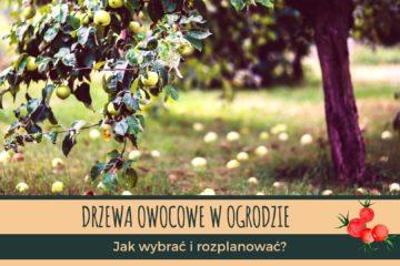 Jak rozplanować drzewa owocowe w ogrodzie